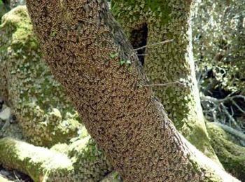 Бабочки долины Петалудес (долина бабочек)