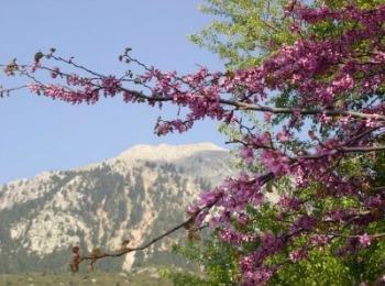 Первое мартовское цветение в Греции