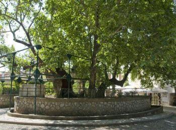Главная жемчужина античного наследия острова - платан Гиппократа