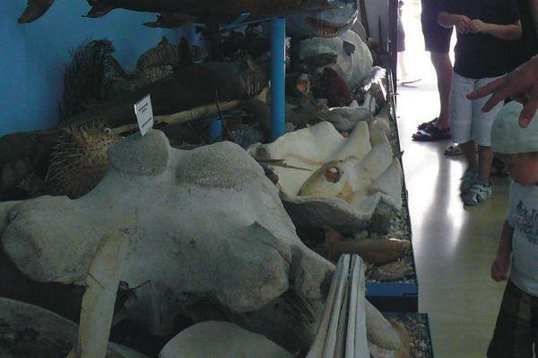 Увлекательные прогулки в музее ракушек