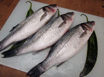 фото рыбы сибас