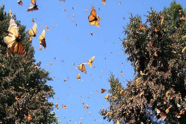 Удивительное место - долина бабочек