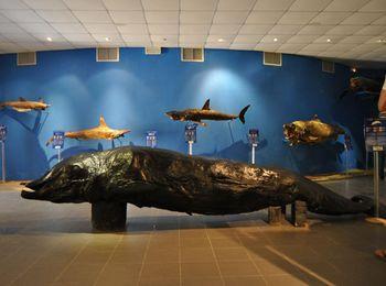 Увлекательные прогулки в аквариуме Родоса