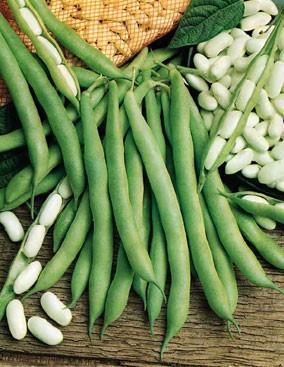 Зёрна фасоли и зелёные стручки