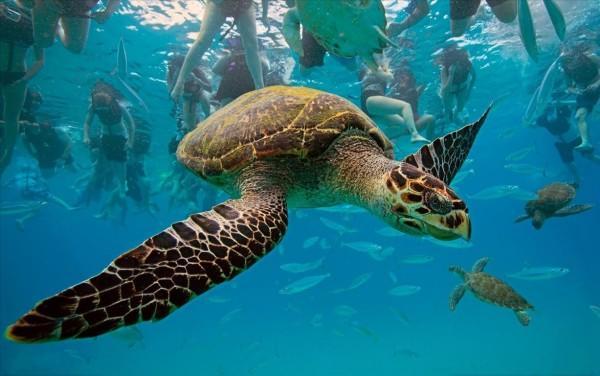 Чистейшие воды побережья острова Закинф