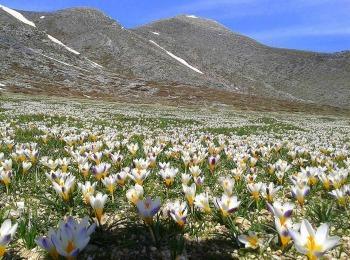 Весеннее цветенье Белых гор Крита