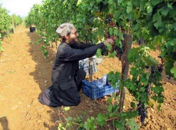 Монастырский виноградник в Греции