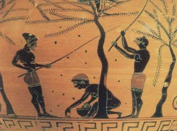"Роспись на вазе ""Сбор оливок в Древней Греции"""