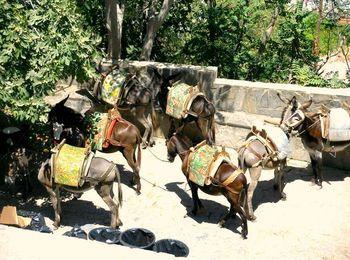 Ослиное такси - критский безмоторный транспорт