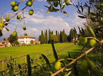Оливковый рай в Греции