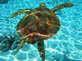 Центр черепах Каретта-каретта